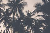 palmy vintage - 93368204