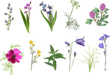 Set Of Eleven Wildflowers Coll...
