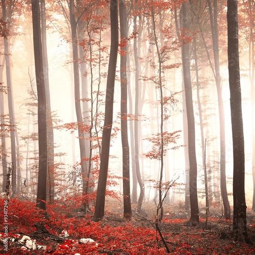 czerwony-las