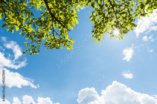 Green leaves against blue sky Poster
