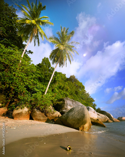 Staande foto Tropical strand Malaysian Beach Island Vacation Summer Tropical Tree Concept