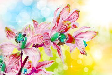 Panel Szklany Podświetlane Egzotyczne orchid flower