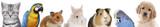 Fototapeta Animals - Hund, Katze, Nager, Vögel, Haustiere in einer Reihe