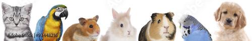 Fotografía  Hund, Katze, Nager, Vögel, Haustiere in einer Reihe