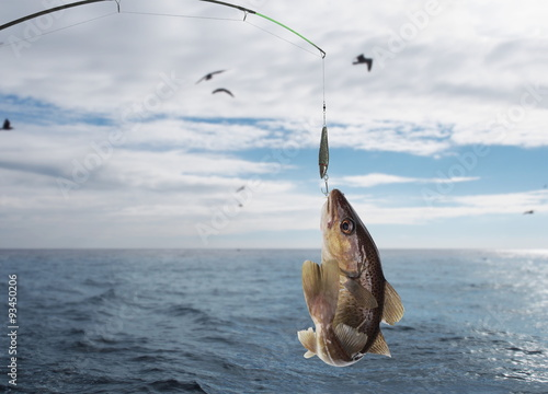 Obraz na plátne codfish