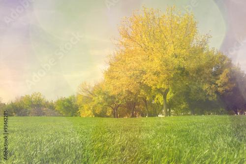 Fototapeta autumn forest at urban park, landscape, fantasy composition abstract obraz na płótnie
