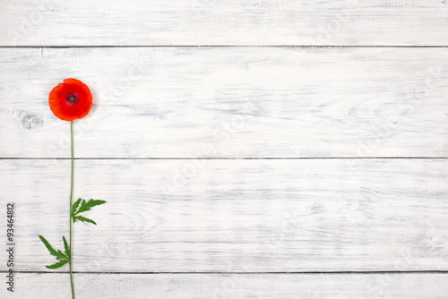 Poster Poppy red poppy on old white wooden table
