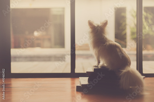 Fotografie, Tablou  Lonely dog