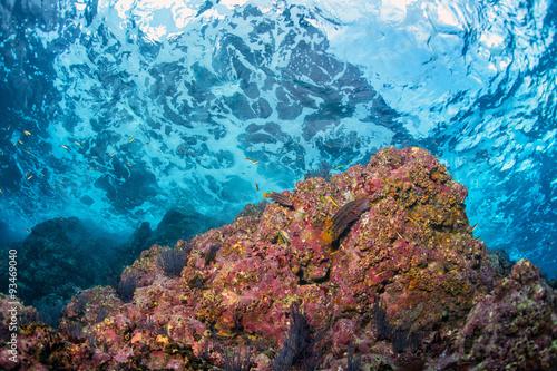 underwater waves on the reef