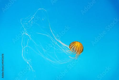 Aquarium Jellyfish in the d...