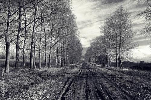 czarno-białe zdjęcie jesień krajobraz