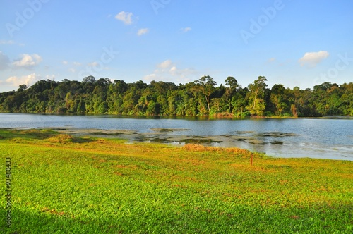 Photo  Macritchie reservoir in the afternoon with greenery and grass field