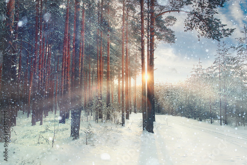 Aluminium Prints Dark grey January winter landscape in the forest