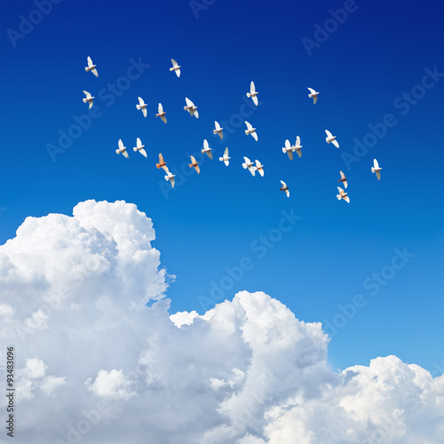 Canvas Print - flock of pigeons flying in blue sky among the clouds