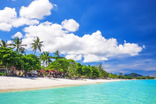 Tropical White Sand With Palm ...