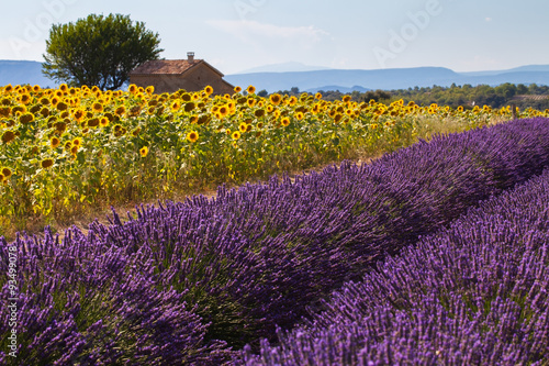Photo  Lavender and sunflower field, Provence, France