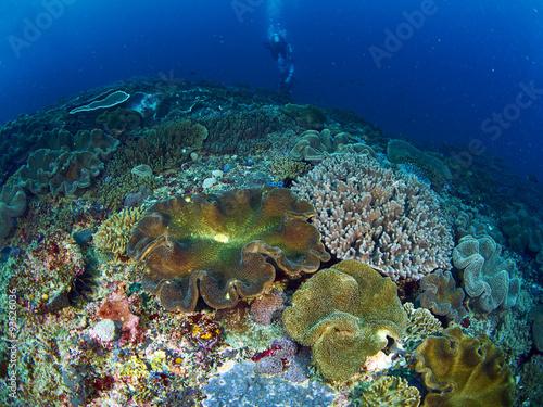 Scuba diver with coral #93526036