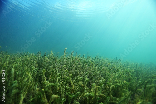 Tuinposter Groene koraal underwater scenery in the river diving