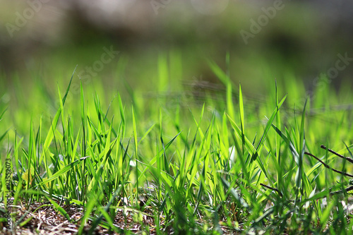 texture of fresh green grass - 93552073