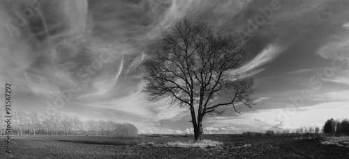 Aluminium Prints Dark grey autumn landscape trees in field