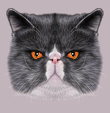 Exotic Shorthair Cat Animal Cute Face. Illustrated Angry Gray And White Exotic Kitten Head Portrait. Realistic Fur Portrait Of Persian Cooper Eyes Kitty Isolated On Grey Background.