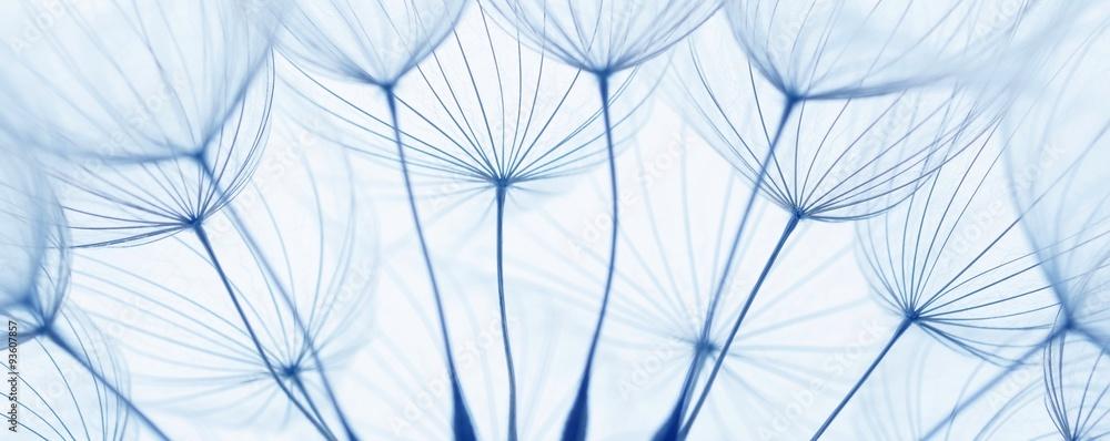 Fototapeta dandelion seeds