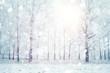 Leinwandbild Motiv white wood covered with frost frosty landscape