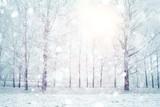 Fototapeta Fototapety z naturą - white wood covered with frost frosty landscape