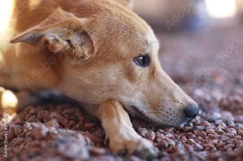 Foto  Pretty cheerful mongrel dog outside