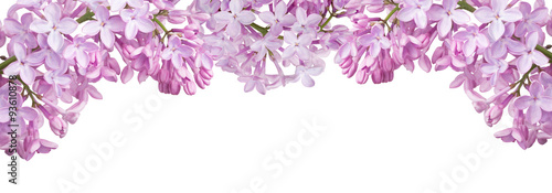 Photo sur Aluminium Lilac isolated stripe from light lilac blooms