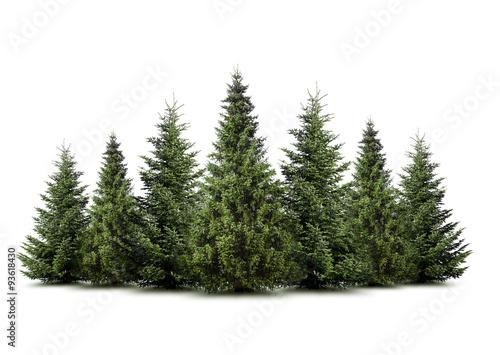 Photo Weihnachtsbäume