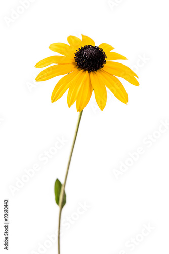Yellow flower Canvas-taulu