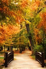 Fototapeta Drzewa pasarela parque del otoño