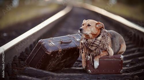 Fotografia Dog on rails with suitcases.