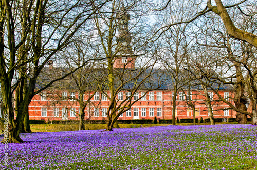 Recess Fitting Crocuses Husum - im Schlosspark