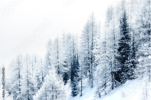 Photo  Snow covered forest