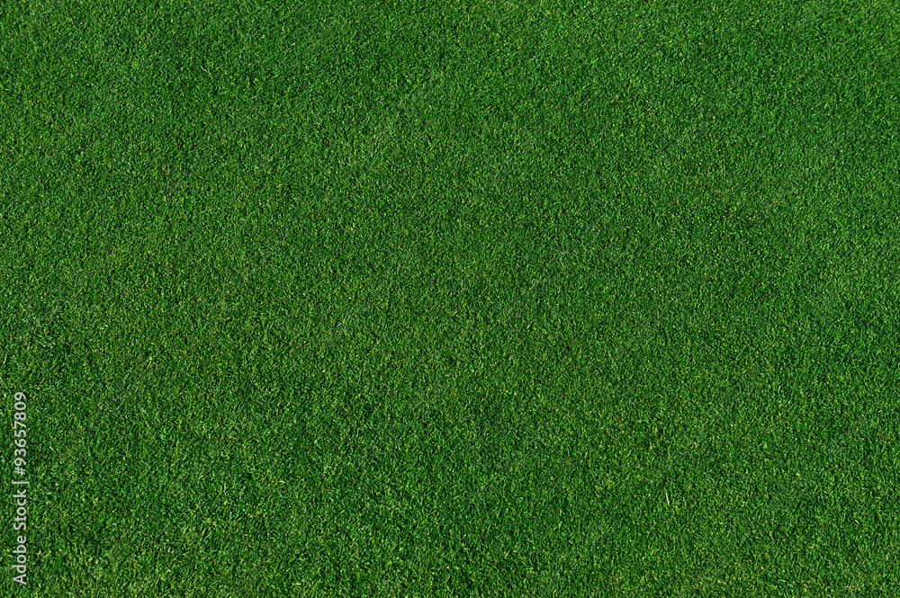 Fototapety, obrazy: real green grass background