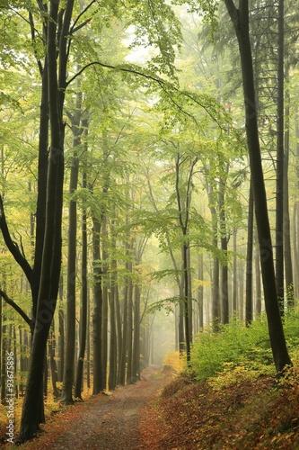 jesienny-bukowy-las-z-mgla-w-tle