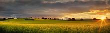 Canola Farmlands As The Sun Sets
