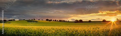Poster Miel Canola farmlands as the sun sets