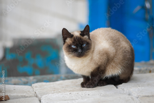 Fotografía  Portrait of graceful Siamese cat sitting on pile of bricks