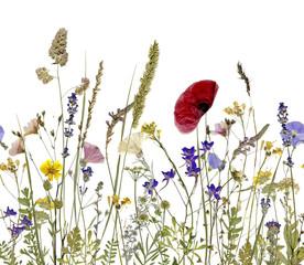 Fototapeta samoprzylepna flowers and herbs