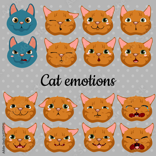 Set of faces of cats on a gray background Fototapet