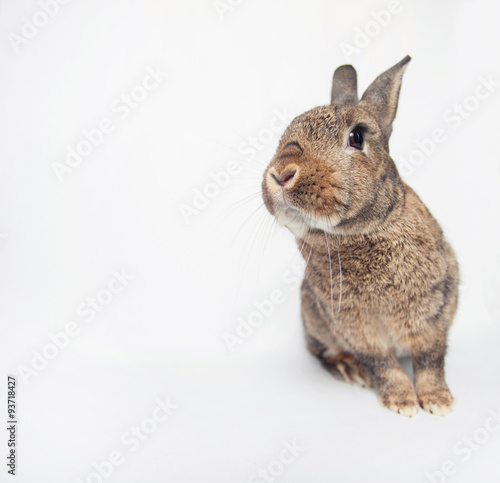 Cadres-photo bureau Squirrel Cheerfull cute rabbit on a white background looking at us