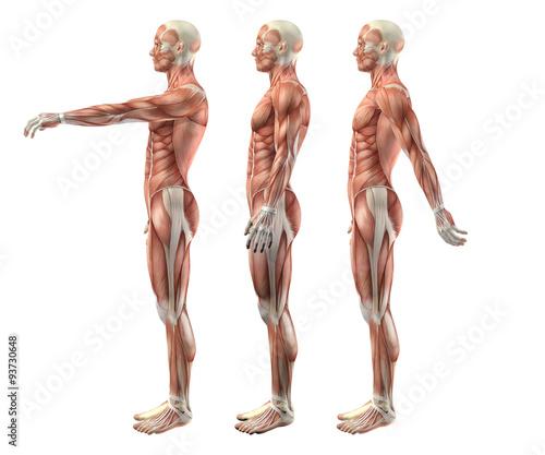 3D male medical figure showing shoulder flexion, extension and h Fotobehang