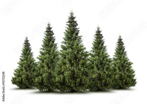 Fototapeta Weihnachtsbäume obraz