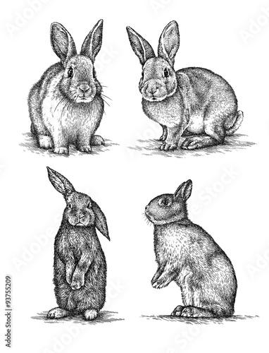 Fotografie, Obraz  engrave rabbit illustration