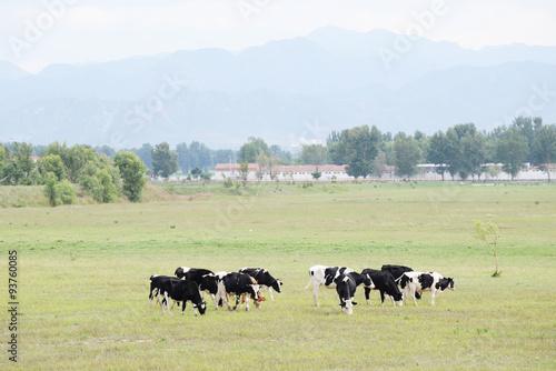 Tuinposter Koe farm animal in ranch