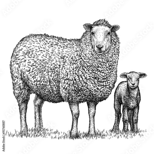 Cuadros en Lienzo engrave isolated sheep illustration