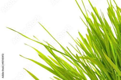 Valokuva  frisches Grasbüschel auf weiß isoliert